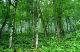 بخش عمده منابع طبیعی زنجان، جنگل و مرتع است