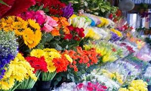 قیمت انواع گل برای روز مادر/ رز ۷۰ درصد گران شد