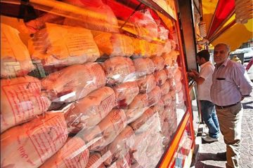فروش مرغ بالاتر از ۱۵هزار تومان ممنوع است/ با متخلفان برخورد قاطع میشود