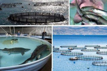 دولت به جای خرید ماهی، مطالبات گندمکاران را تسویه کند