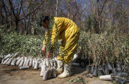 غرس ۶ هزار اصله نهال به مناسبت هفته منابع طبیعی در اسدآباد